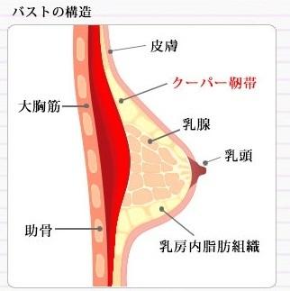Viage ナイトブラ 補正ブラ 美乳 バストケア バストアップ効果 クーパー靭帯.jpg