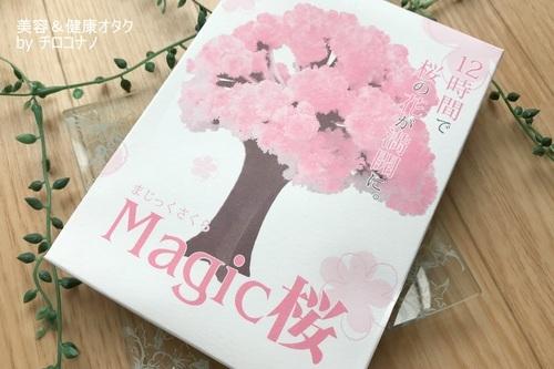 magic桜 プレゼント 贈り物 サプライズ Sakura 送料無料 口コミ1.JPG